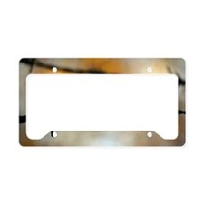 Barbed Wire License Plate Holder