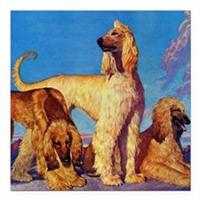 """Afghan Hounds Square Car Magnet 3"""" x 3"""""""
