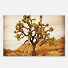 Joshua Tree Postcards (Package of 8)