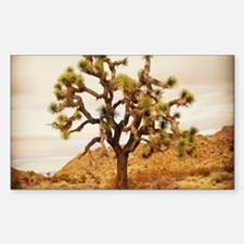 Joshua Tree Decal
