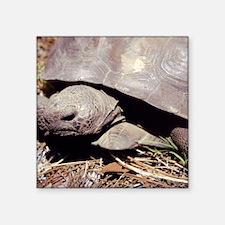 "Land Tortoise Square Sticker 3"" x 3"""