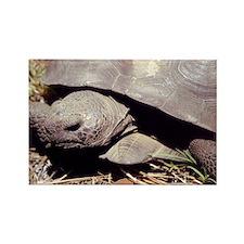Land Tortoise Rectangle Magnet