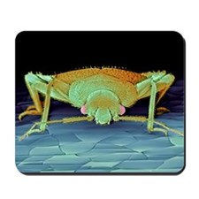 Bed bug, SEM Mousepad