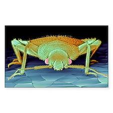 Bed bug, SEM Decal