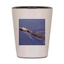Gator Swimming Shot Glass
