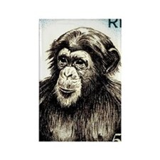 1955 French West Africa Chimp Pos Rectangle Magnet