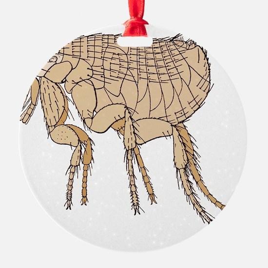 Black Death rat flea, artwork Ornament