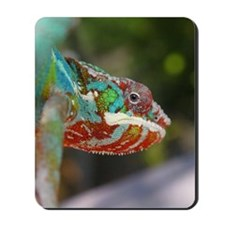 Chameleon Looking Mousepad