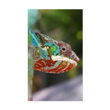 Chameleon Looking Decal
