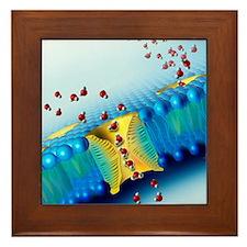 Aquaporins, artwork Framed Tile