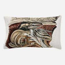 Bony labyrinth, 1844 artwork Pillow Case