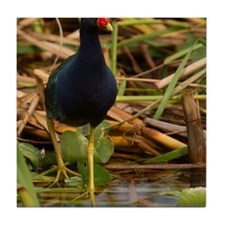 Purple Gallinule Tile Coaster