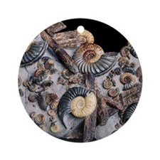 Ammonites Round Ornament
