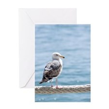 Seagull By The Water Greeting Card