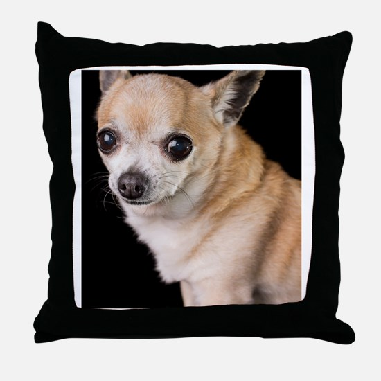 tan chihuahua on black background Throw Pillow