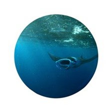 """Manta Ray Swims in the water 3.5"""" Button"""