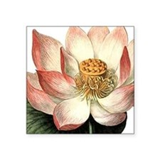 "Botanical Lotus Square Sticker 3"" x 3"""