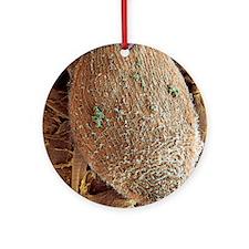 Ciliate protozoan, SEM Round Ornament