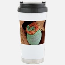 Ciliate protozoan, SEM Stainless Steel Travel Mug