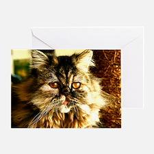 Persian Kitten face Greeting Card