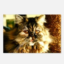 Persian Kitten face Postcards (Package of 8)