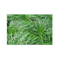 Green Grass Rectangle Magnet