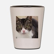 Tabby Cat Stare with Green Eyes Shot Glass