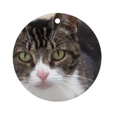 Tabby Cat Stare with Green Eyes Round Ornament