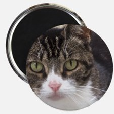 Tabby Cat Stare with Green Eyes Magnet