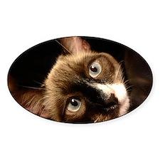 A Siamese Cat Decal
