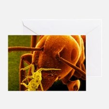 Coloured SEM of a Garden ant carryin Greeting Card