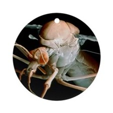 Coloured SEM of a crane fly (Tipula Round Ornament