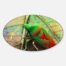 Coloured SEM of a shield bug (Elasm Decal