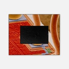 Coloured SEM of integrated circuit m Picture Frame