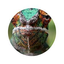 "Chameleon orange eyes 3.5"" Button"