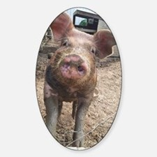 Funny Muddy Red Pig Sticker (Oval)