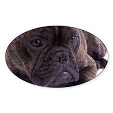 French bulldog - totally contented Decal