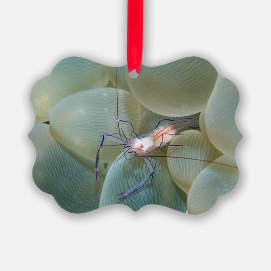Coral shrimp Ornament