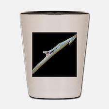 Cone shell harpoon, SEM Shot Glass