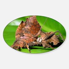 Dead-leaf bush crickets mating Sticker (Oval)