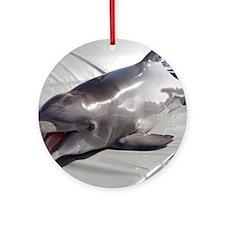 Dolphin training Round Ornament