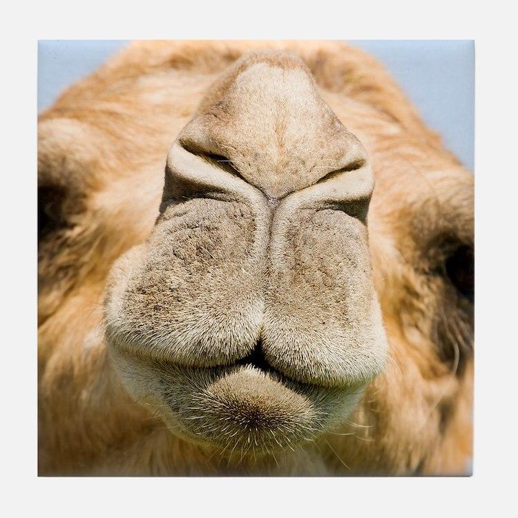 Dromedary camel Tile Coaster