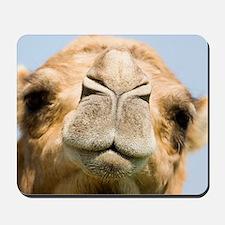 Dromedary camel Mousepad