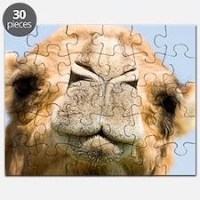 Dromedary camel Puzzle