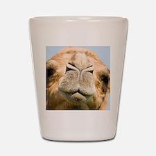 Dromedary camel Shot Glass