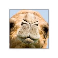 """Dromedary camel Square Sticker 3"""" x 3"""""""