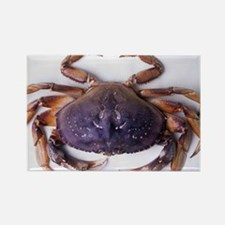 Dungeness crab Rectangle Magnet