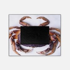 Dungeness crab Picture Frame