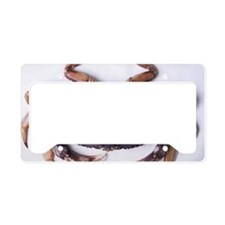 Dungeness crab License Plate Holder