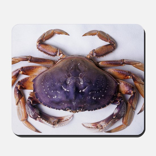 Dungeness crab Mousepad